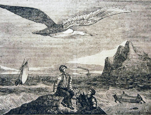 Presentando a Albatros